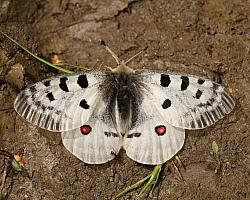 Butterflies of France