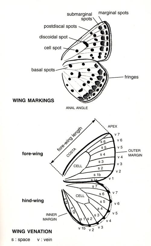 wing diagram jpg : wing diagram - findchart.co